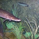 Downtown Aquarium - 116_3849.JPG