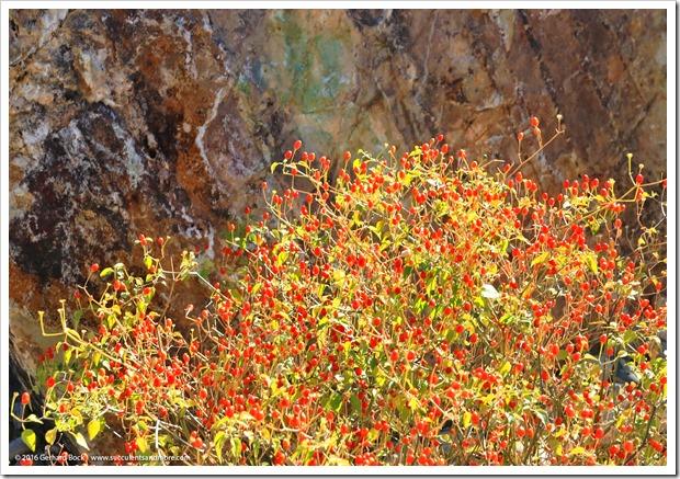 151230_Tucson_Tohono-Chul-Park_0072
