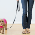 Canada COVID Curfew Only Permits Dogwalking After Hours. So Wife Walks Husband On A Leash.
