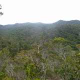 Parc de Mantadia (Madagascar), 28 décembre 2013. Photo : J. Marquet