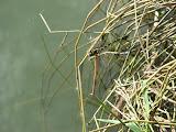 dragonfly at Meihua Lake