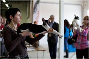 cats-show-24-03-2012-fife-spb-www.coonplanet.ru-108.jpg