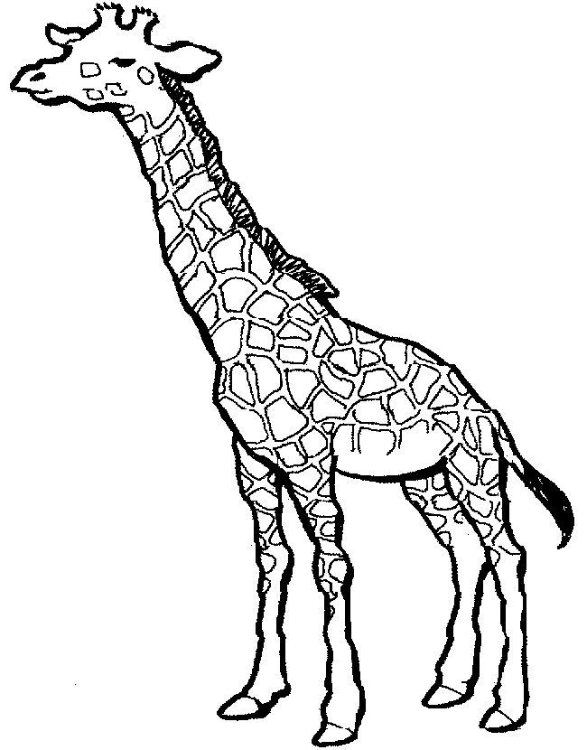 blog creation2: Printable animal giraffe coloring pages for ...