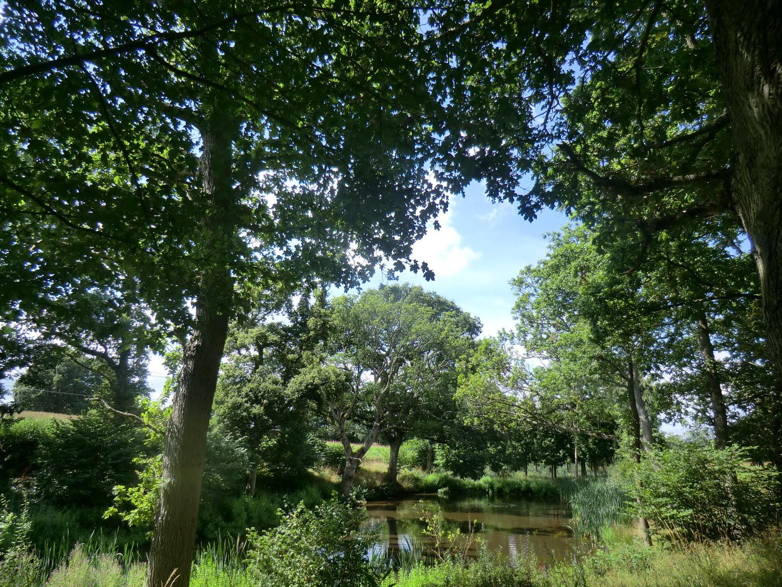 CIMG3922 Pond at Lower Ridges