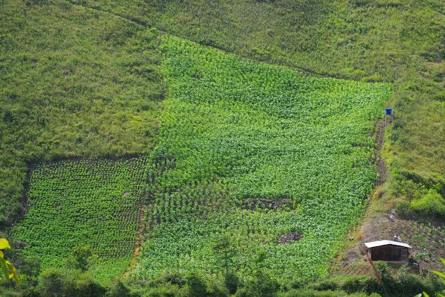 La Vallée du Rio Guallupe à El Limonal (Imbabura, Équateur), 2 décembre 2013. Photo : J.-M. Gayman