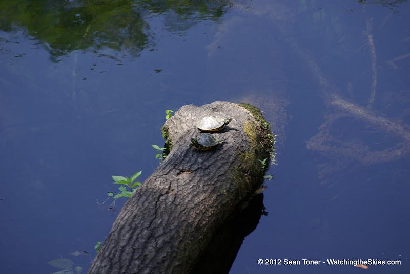 04-04-12 Hillsborough River State Park - IMGP4411.JPG