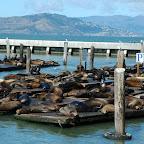 Sinds 1990 verblijven de zeeleeuwen hier.