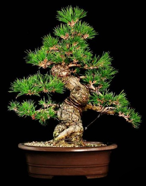 Bonsai Aesthetics