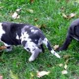 Winston & Beatrix @ 3 1/2 weeks