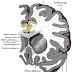 Plasticity of the Brain [Brainology]