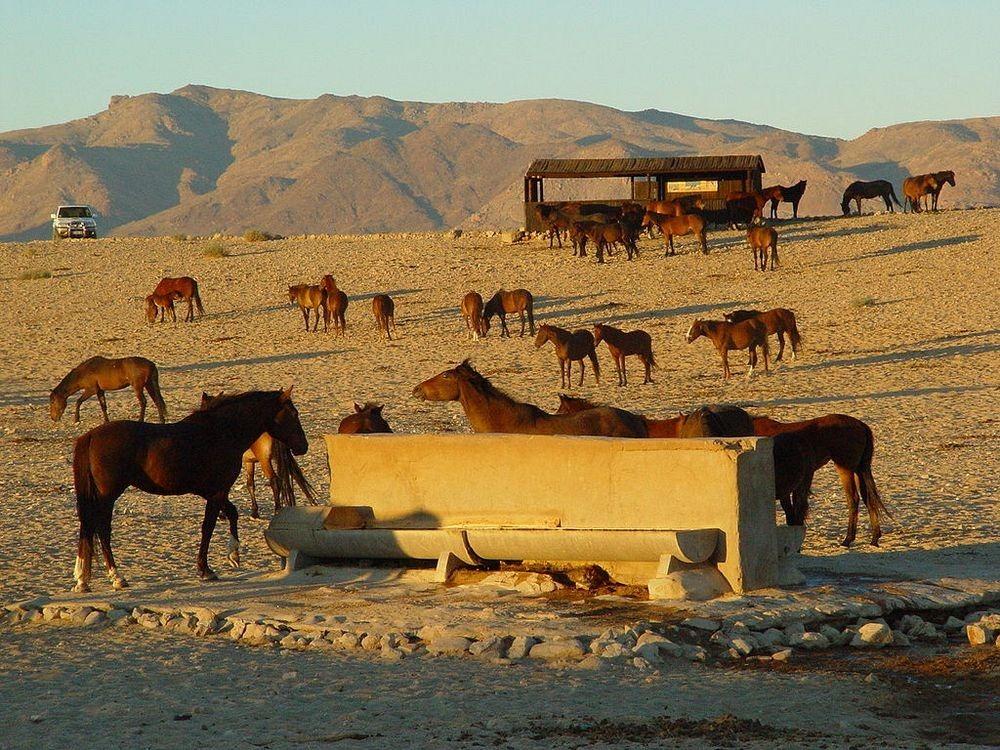 namib-desert-horse-2