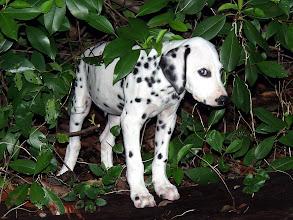 Photo: The Shy Dog