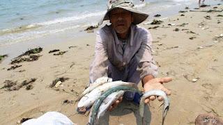 Vietnam: des milliers de poissons retrouvés morts sur les plages.