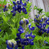 Gardening 2013 - 115_5991.JPG