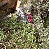 Sortida Sant Salvador de les espasses 2006 - CIMG8260.JPG