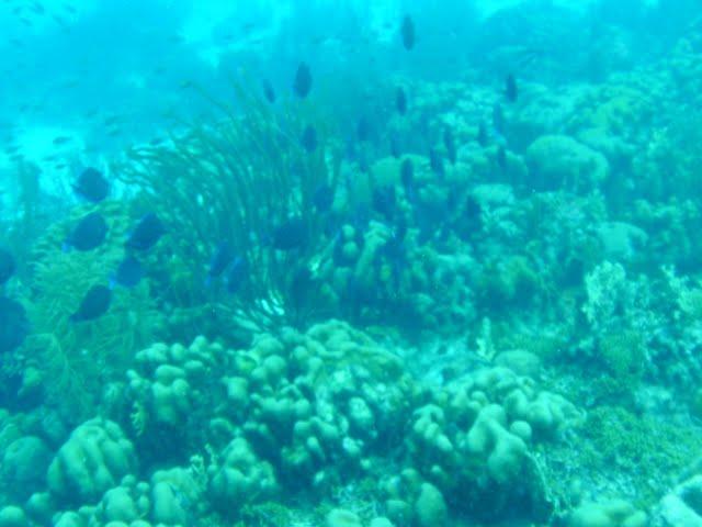Bonaire 2011 - PICT0255.JPG