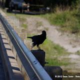 04-06-12 Myaka River State Park - IMGP4424.JPG
