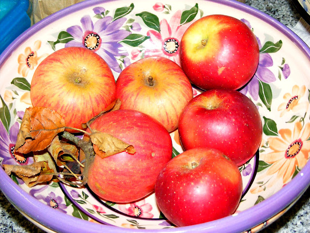 Homegrown apples, Indre et Loire, France. Photo by Loire Valley Time Travel.