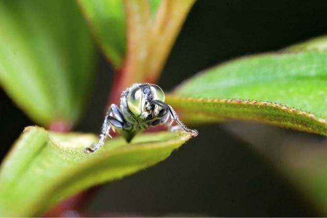 Macro photo - Insect