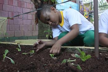 Horta Educativa: alimentação de qualidade para nossas crianças