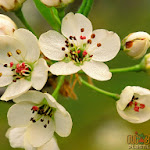 Flower 039_1280px.jpg