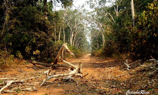 La forêt amazonienne à 35 km au SE de Colider, entre Itauba et Marcelândia (Mato Grosso, Brésil), 6 septembre 2010. Photo : Cidinha Rissi