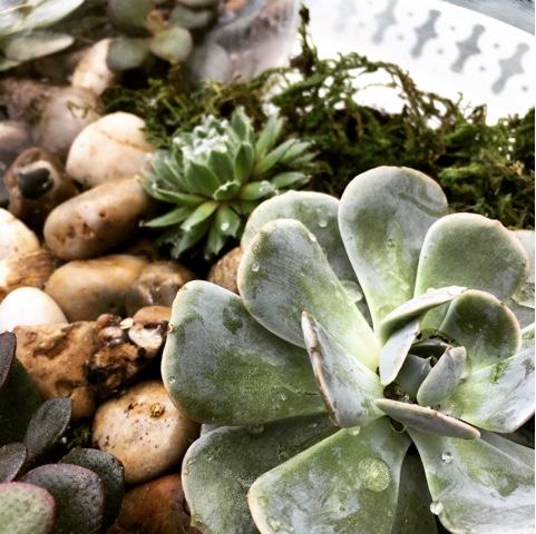#DIY terratorium de succulentes