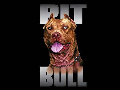 Pitbull Dog Live Wallpaper