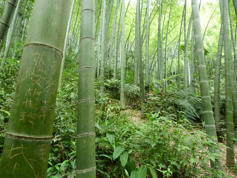 CHINE.SICHUAN.YIBIN, et la mer de Bambous - 1sichuan%2B525.JPG