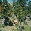 1987 - Grand.Teton.1987.13.jpg