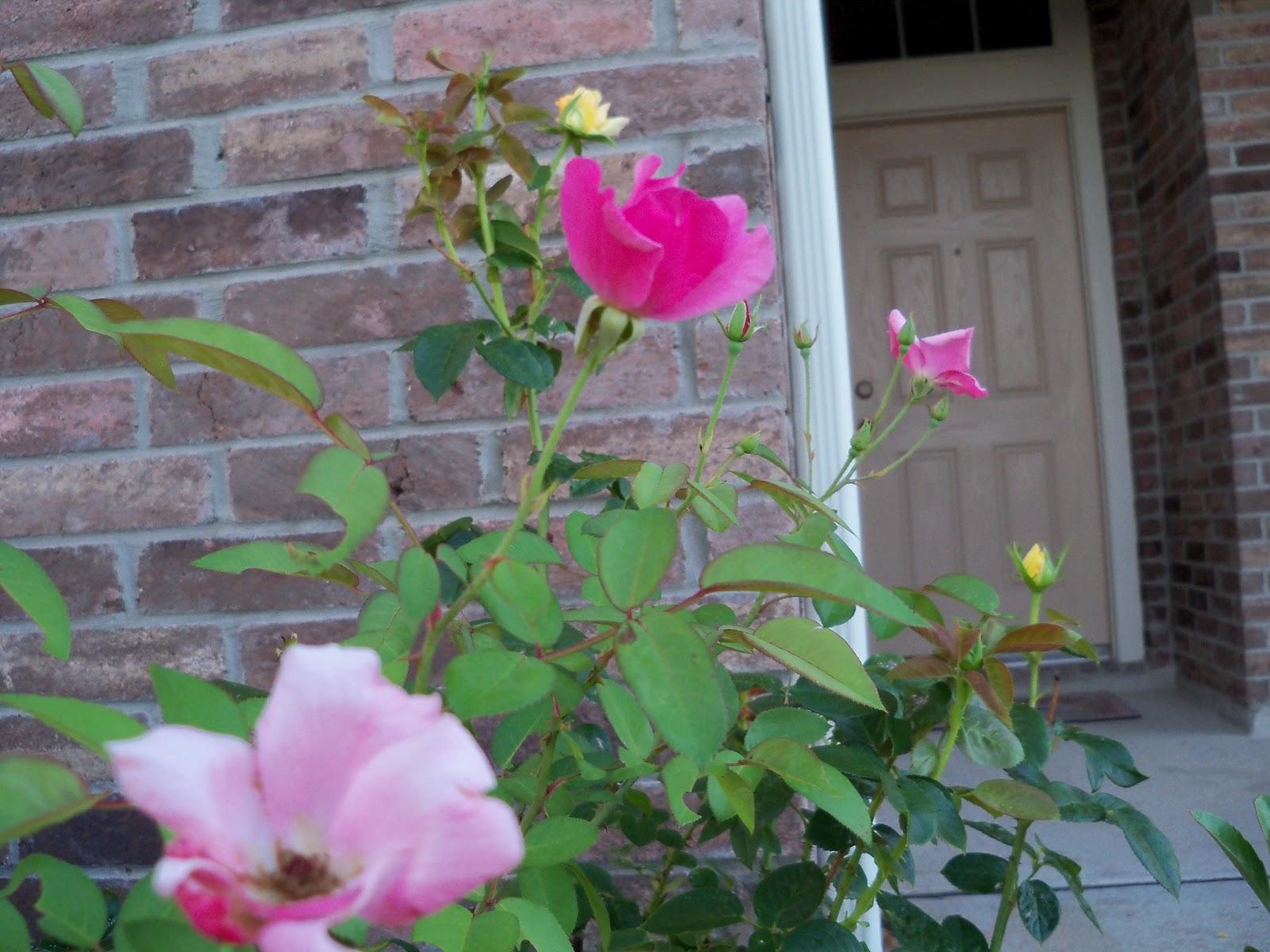 Gardening 2010, Part Three - 101_3994.JPG