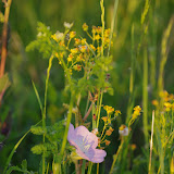 2013 Spring Flora & Fauna - IMGP6344.JPG