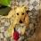 Dariel Raye's profile photo