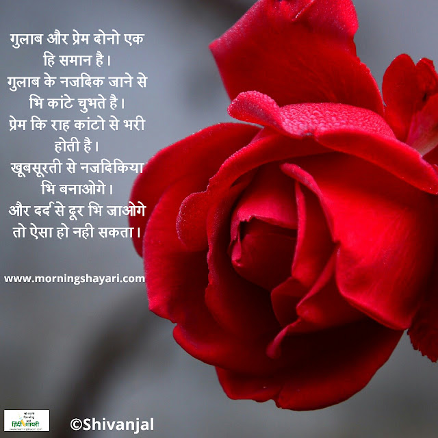 gulab shayari image gulab shayari photo gulab ka photo shayari gulab photo shayari good morning gulab shayari gulab image shayari gulab shayari photo download gulab ka phool shayari image gulab shayari wallpaper gulab good morning shayari