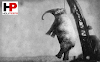 The story of Murderous Mary, the only elephant to be hanged in history.