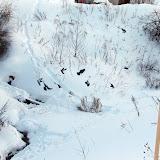 Голуби прилетают пить. -25 - ручей не замерз.