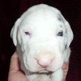 Sharon's blue-eyed boy @ 3 weeks