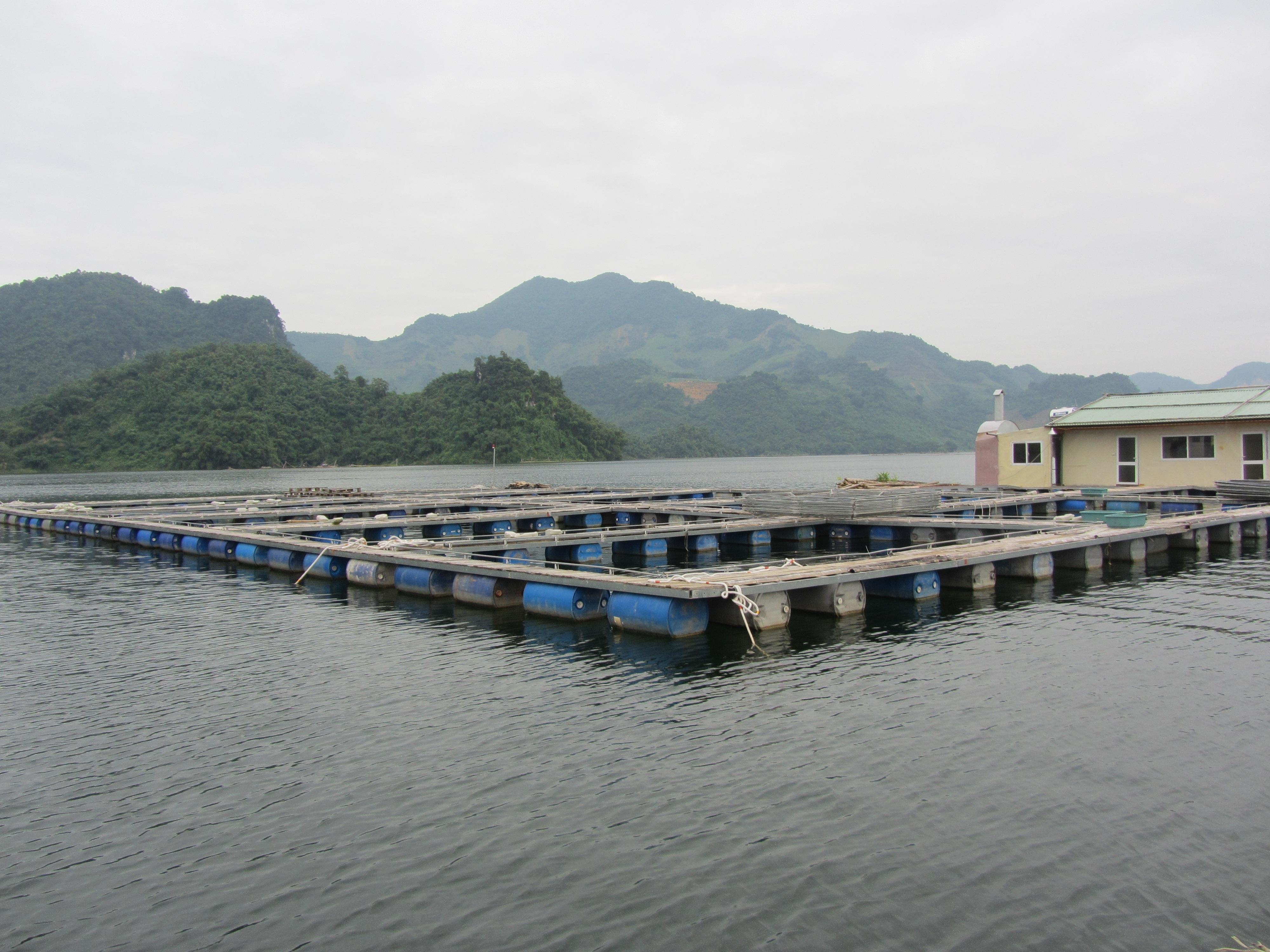 Kỹ thuật nuôi cá tầm trong lồng bè trên hồ chứa - 563d4dc9439d8