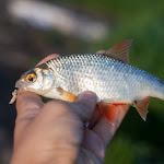 20160526_Fishing_BasivKut_010.jpg