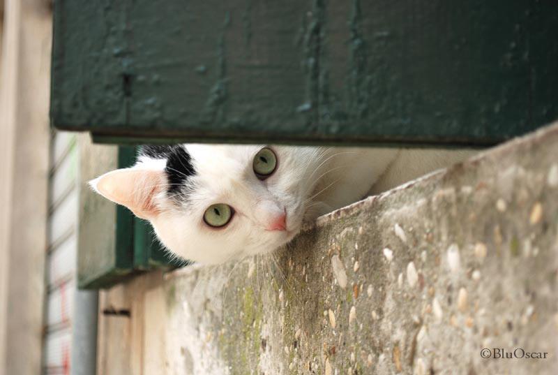 Gatti veneziani 06 02 2010 N 1