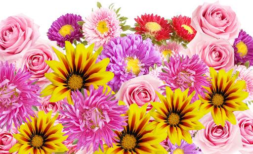 cvety-lepestki-rozy.jpg