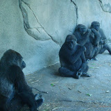 Pittsburgh Zoo Revisited - DSC05183.JPG