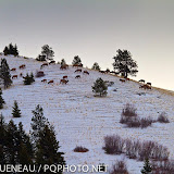 A herd of elk roams Mount Jumbo's grassy expanses. The south zone is part of their winter range and is closed to people from December 1 until March 15.