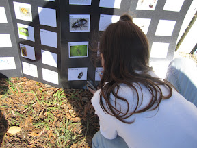 Student records data on poster of invertebrates.