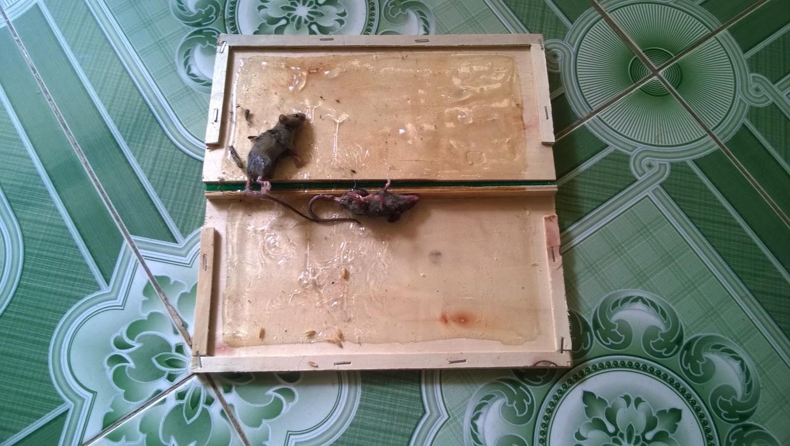 Keo dính bẫy chuột nhắt