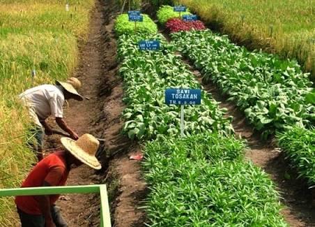 Usaha Pertanian Modal Kecil Yang Menguntungkan Sukses