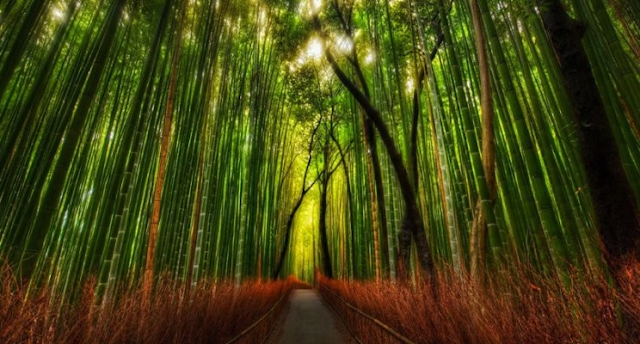 Chinese Bamboo Tree as a Way of Success In Your Life