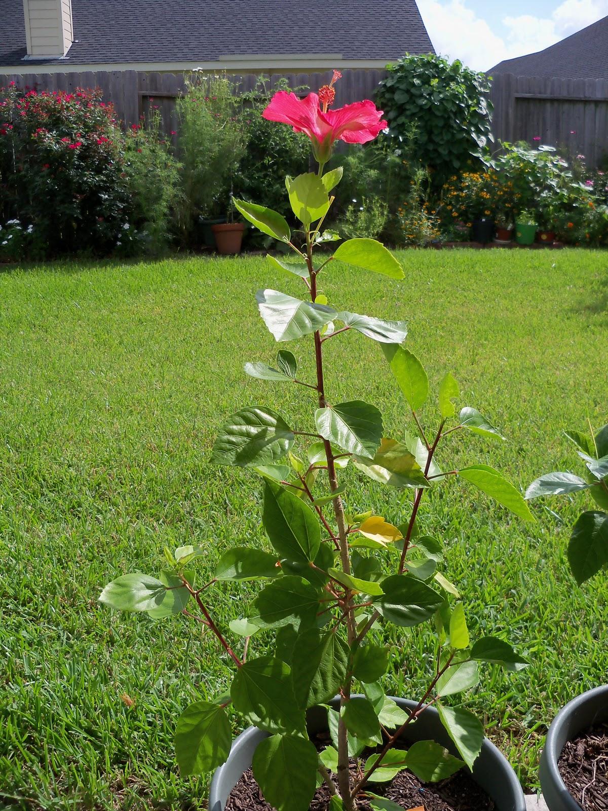 Gardening 2010, Part Three - 101_4973.JPG