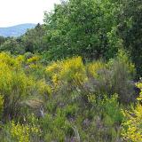 Biotope de Zerynthia rumina (L., 1758). Plateau de Coupon (511 m), Viens (Vaucluse), 8 mai 2014. Photo : J.-M. Gayman
