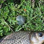 20140817_Fishing_Pugachivka_037.jpg